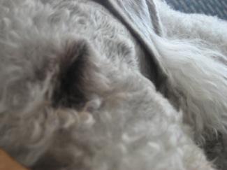 sleepingdog2