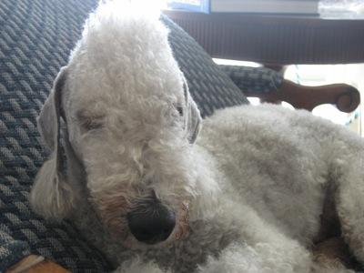 sleepingdog5