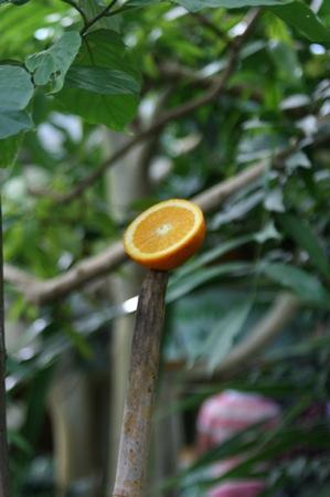 fruitonastick
